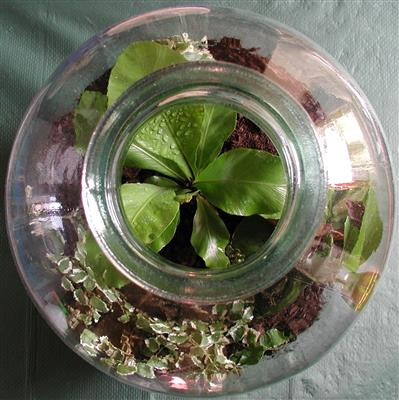 what-is-a-terrarium-and-why-do-i-need-one