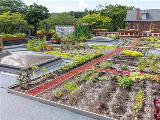 create-your-own-eco-friendly-garden
